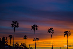 Blue/Orange Sunset (Miiksterr) Tags: sunset hb palmtrees orange blue black houses city sky silhouette outdoors outside landscape outdoor dusk sun cloud serene canoneos rebelt5 nifty50 lightroom