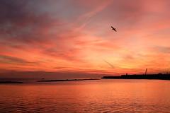 Bari, 2016 (rodato) Tags: sky cielo bari puglia apulia sea lungomare