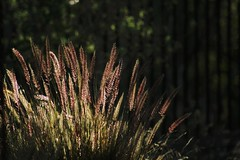 Wild Grass Sunset (Robert Borden) Tags: usa northamerica california socal westcoast southwest santaclarita light sunset goldenhour grass