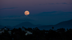 _M6U8791 (exceptionaleye) Tags: availablelight california moon fullmoon moonrise canoneos canon70200f28l balboapark balboaparksandiegoca nature nightphotography night lowlight exceptionaleye color ngc