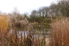 Teich vor Jugendhaus und Bildungsstätte - 14-Nothelfer-Kapelle