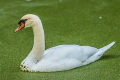 25 (photocat001) Tags: flamingogardens botanicalgardens animals wildlife nature parks recreation interesting