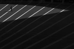 interval (Hiro.Matsumoto) Tags: blackandwhite monochrome lines minimalism tokyo sony