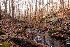 untitled (Homemade) Tags: nikon2470mmf28 nikkor2470mmf28 onatrupreserve southsalem lewisboro autumn fall autumncolours fallcolors westchestercounty woods forest nature ny newyork