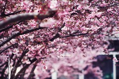 Pink (l3v1k) Tags: ifttt 500px spring nature flower sun light vintage lights summer plants beautiful shadow love pretty romantic green pink splashes gorgeous colorful cool scent rays flares paris