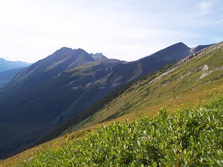 British Columbia Wolf Hunt & Big Game 26