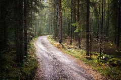 Road to the Light (Digikuvaaja) Tags: road trees light summer sunlight tree green nature beautiful leaves sunshine mystery rural forest season landscape outdoors moss woods day view path background country scenic scene creepy foliage dirt trail fantasy vegetation environment lush gravel