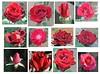 dozen-red-roses-140421a