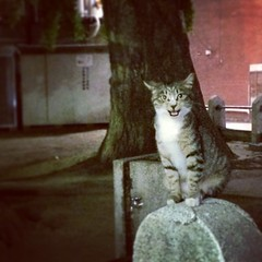 #cat #night #tokyo #streetphotography # (Naoki Yoshimoto) Tags: square squareformat hudson iphoneography instagramapp uploaded:by=instagram