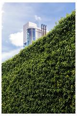London tower with hedge. (Jeffhubbard) Tags: london hedge jeffhubbardphotography royalmintyard