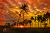 Coconut Tree Sunset (Ringgo Gomez) Tags: malaysianphotographers nikon2470mm nikond700 sarawakborneo