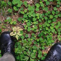 16/6 (Mattias Lindgren) Tags: summer boots sweden military 365 clover 50mmf14 m90 svensksommar nikond600 känga stålex