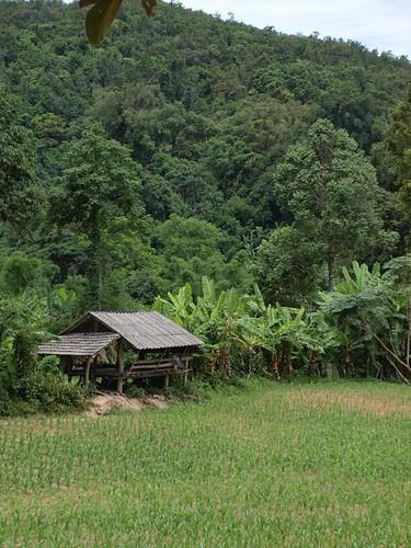 Near Chiang Mai