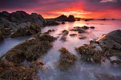Pacific Grove (Matt Kawashima) Tags: ocean california ca sunset sea seaweed color northerncalifornia rock monterey big rocks bigsur july pg pacificocean coastal sur pacificgrove northern peninsula bigsurca montereypeninsula coastalcalifornia pacificgrovecalifornia bigsurcalifornia pacificgrovesunset