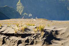 Gunung Bromo (NoDurians) Tags: indonesia java nationalpark vulcano tengger eastjava gunungbromo cemorolawang seaofsands