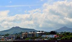 Bray (Belfastsocrates) Tags: ireland nature boats seaside sailing harbour gulls swans yachts wicklow bray muteswan irishsea countywicklow