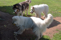 """Zarro And Chase Are Watching Princess Have Her Way With The FLAG 2 • <a style=""""font-size:0.8em;"""" href=""""http://www.flickr.com/photos/96196263@N07/14713081597/"""" target=""""_blank"""">View on Flickr</a>"""