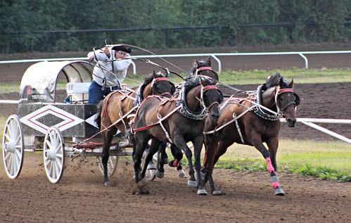 Horse Racing Alberta image