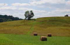 Field with hay bales (Sarah Hina) Tags: ohio field athens haystacks