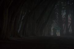 Olinda Football Ground (Ranga 1) Tags: nightphotography mist fog night canon twilight dusk australian australia melbourne victoria explore australianlandscape olinda nightexposure davidyoung ticketbox ef24105mmf4lusm cypresspines canoneos5dmarkiii
