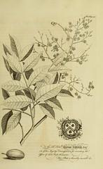 Anglų lietuvių žodynas. Žodis yellow mombin tree reiškia geltona mombin medis lietuviškai.