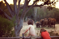 San Diego Wildlife Safari Park (catherinelaceyphoto) Tags: california travel family sunset vacation holiday love nature beauty backlight daylight moments roadtrip adventure socal caca usausa losangeleslosangeles losangelesfamilyphotographer