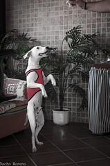 :-) (Cranwellys) Tags: dog perros 1855mm nikond5000