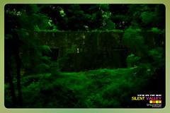Silent Valley---------------44 (Binoy Marickal) Tags: india green tourism nature water rain kerala mala palakkad evergreenforest treaking silentvalleynationalpark nilgirihills mannarkkad mukkali kuzhur indiabinoymarickal