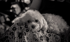 IMG_7523-2 (Jaetographer) Tags: bw dog pet animal canon rest dslr 6d