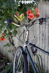 Simple (cassidyforino) Tags: family flowers summer vacation lighthouse beach beautiful bike canon ma fun marthas vineyard provincetown cape cod hurray 60d