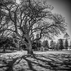 Shadows 2 (Mariasme) Tags: blackandwhite monochrome tree peterdepenapark shadows light hdr friendlychallenges gamewinner gamex2winner gamex3winner agcg winner challengeyouwinner