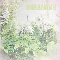 Dreaming (jacqui forster) Tags: flowers white green photoshop canon garden dreaming dreams photoart topaz lightroom creativephotography digitalartist amarimages jacquitigheforster