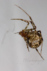 garage spider (757artography) Tags: macro america canon midwest spiders indiana insects 60d 100mmf28canon 757artography