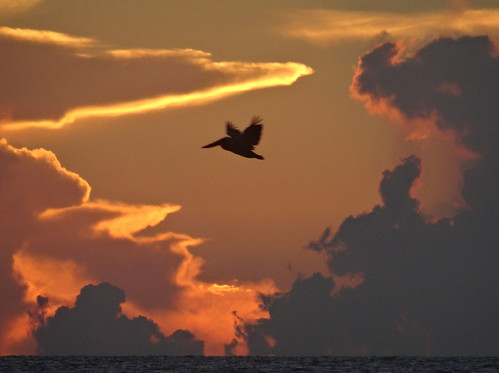 Pelican at sunset - Gulf of Mexico (ashabot) Tags: ocean sunset summer orange pelicans gulfofmexico nature birds clouds golden evening florida jetty summerevenings
