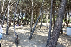 the place beyond the pines (-giulia) Tags: trees sea summer italy hot nature walking relax italia mare south places natura pines promenade sole gallipoli salento puglia salentu pini caldo ientu puntasuina