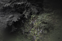 (Julia Mora Crespo) Tags: trip travel trees green fog forest germany deutschland nikon alemania kassel mistery nikond5000