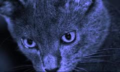 Reflexão Felina