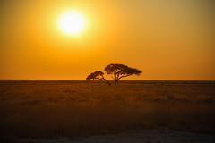 Namibia-2592 (Francesca Braghetta) Tags: africa travel desert dunes lion namibia viaggi travelblog etosha himba namib avventure viaggiare avventurenelmondo viaggiavventurenelmondo sussveil inviaggioconfrancesca
