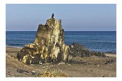 _MG_6862calagrande (Alejandro M. Valverde) Tags: verde sol azul de mar cabo agua playa colores luna arena amarillo gata estrella almería sal tierra piedra salitre