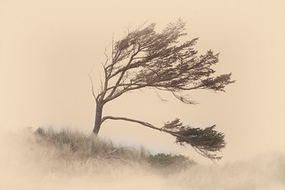 The Wind Dances