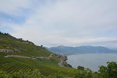 Unesco Lavaux Vineyard. (Azariel01) Tags: lake alps alpes schweiz switzerland vineyard suisse lac unesco léman vignes vaud genevalake lavaux 2014 lacléman