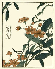 Rangoon creeper (Japanese Flower and Bird Art) Tags: flower art japan japanese book picture creeper woodblock rangoon indica ukiyo shigemasa combretaceae quisqualis kitao readercollection