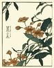 Rangoon creeper (Japanese Flower and Bird Art) Tags: flower art japan japanese book picture creeper woodblock rangoon indica ukiyo shigemasa combretaceae quisqualis kitao readercollection