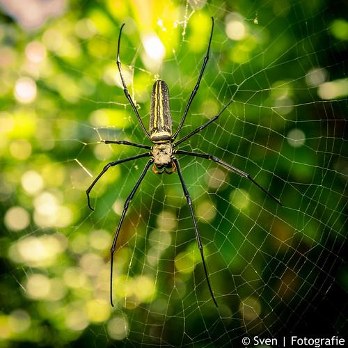 Big Spider, Big web