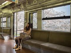 Cherry Blossom Girl (Magic Pea) Tags: street travel sleeping girl train photography photo candid streetphotography hiroshima cherryblossom unposed quirky tadanoumi magicpea