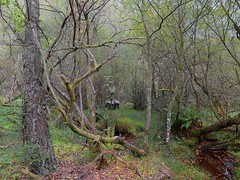 Figure in the Forest. (maginoz1) Tags: forest canon scotland highlands september figures fora 2014