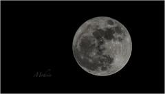 Supermoon Superbig (Syed Mohsin Khadri) Tags: supertelephoto supermoon moon moonlight fullmoon bluemoon nikond7100 nikonphotography nikonmiddleeast nikonasia corn corniche abudhabicorniche nikon nikkor200500mm zoomlens uaelandscapes