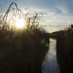 marshy thumbnail