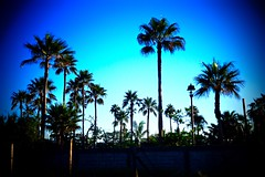 Sky effect at sunrise (malcolmharris64) Tags: sky effect sunrise sancarlos sonora mexico palm trees