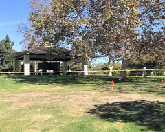 008 Someone Takes Umbridge With Control Placement (saschmitz_earthlink_net) Tags: 2016 california longbeach eldorado orienteering laoc losangelesorienteeringclub losangeles losangelescounty eldoradoeastregionalpark park parks caution tape cone tree control